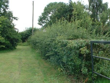 hedges1-2011